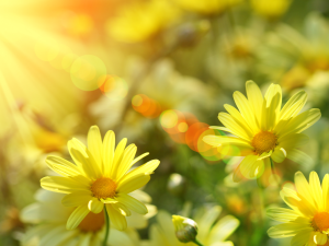 my-only-sunshine-wallpaper-nature-picture-spring-images