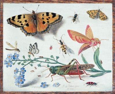 Jan van Kessel the Elder [Public domain], via Wikimedia Commons